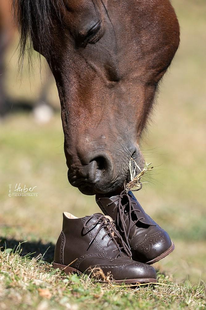 Das ist ein Pferd